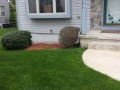 front yard-2