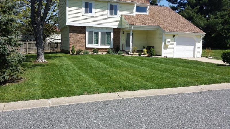 3 Weeks After Lawn Treatment