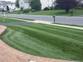 Summer Patch Lawn Disease After Treatment