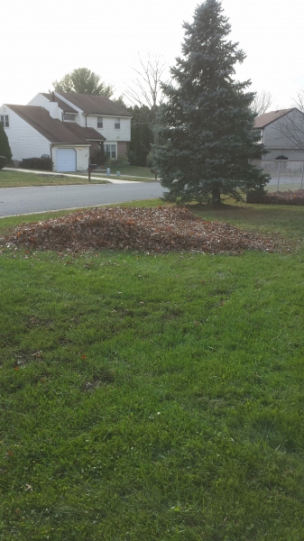 leaves-new-house-leaf-pile