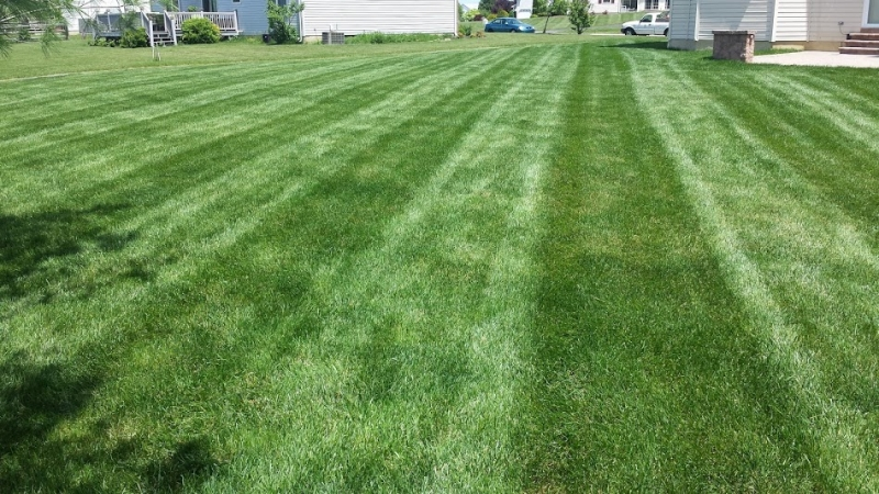 Summer  Lawn Treatment Before