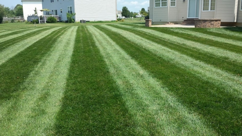 Summer  Lawn Treatment After
